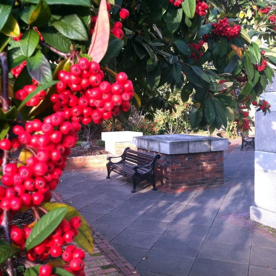 The Hibernia Rooftop Garden